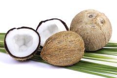 Kokosnoot met palmbladen Royalty-vrije Stock Afbeelding