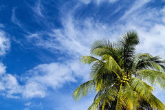 Kokosnoot op blauwe hemel Stock Afbeelding