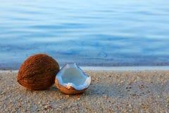 Kokosnoot op Caraïbisch strand stock afbeelding