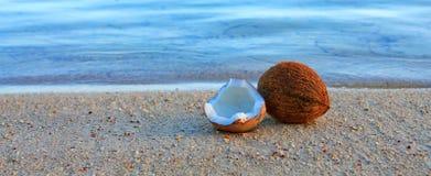 Kokosnoot op Caraïbisch strand royalty-vrije stock fotografie