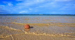 Kokosnoot op Caraïbisch strand stock fotografie