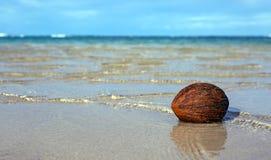 Kokosnoot op Caraïbisch strand en blauwe hemel royalty-vrije stock fotografie
