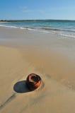 Kokosnoot op een strand Stock Foto