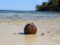 Kokosnoot op een strand Stock Fotografie