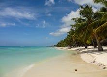 Kokosnoot op een wit strand Stock Foto's
