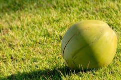 Kokosnoot op het gras Royalty-vrije Stock Afbeeldingen