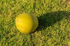 Kokosnoot op het gras Stock Afbeelding