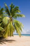 Kokosnoot op het strand Stock Afbeelding