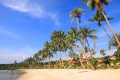Kokosnoot op het strand Royalty-vrije Stock Fotografie