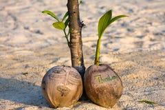 Kokosnoot op het strand Stock Foto's