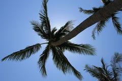 Kokosnoot op het strand Stock Foto