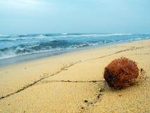 Kokosnoot op het strand Royalty-vrije Stock Foto
