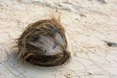 Kokosnoot op het zand Stock Foto