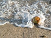 Kokosnoot op kust Royalty-vrije Stock Foto's