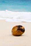 Kokosnoot op strand Royalty-vrije Stock Afbeelding