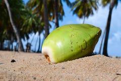 Kokosnoot op strand van Puerto Rico stock foto's