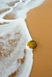 Kokosnoot op tropisch oceaanstrand Royalty-vrije Stock Foto's