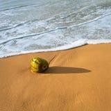 Kokosnoot op tropisch oceaanstrand Stock Foto's