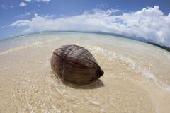 Kokosnoot op tropisch strand, Fiji Stock Fotografie