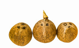 Kokosnoot op wit met het knippen van weg wordt geïsoleerd die Royalty-vrije Stock Afbeeldingen