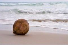 Kokosnoot op zand Royalty-vrije Stock Foto's