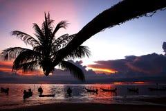 Kokosnoot tegen de kleurrijke zonsondergang Stock Afbeeldingen
