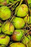 Kokosnoot in Thailand Royalty-vrije Stock Foto's