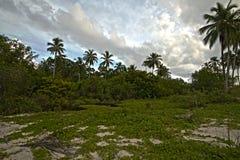 Kokosnoot, tuin, park Stock Foto's