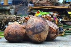 Kokosnoot voor Geestelijke Gebeurtenis Royalty-vrije Stock Foto