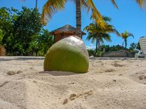 Kokosnoot in wit zand op het strand met blauwe hemel en palmen in Nassau de Bahamas stock afbeeldingen