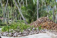 Kokosnoten Royalty-vrije Stock Afbeeldingen