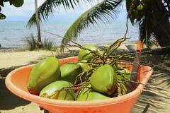 Kokosnoten die net zijn geplukt Royalty-vrije Stock Afbeelding