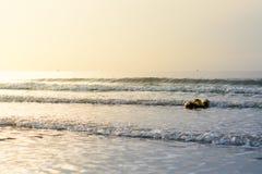 Kokosnoten die op het overzees drijven Stock Foto's