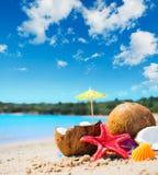 Kokosnoten en zeester door de kust stock afbeeldingen