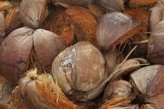 Kokosnoten, geraspt Omhulsel, kerrie Stock Foto