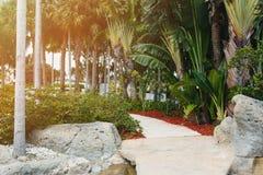 Kokosnoten groene palmen onder de zon, tropische exotische mooie achtergrond De zomer, vakantie, luxetoevlucht, toerismevakantie stock foto
