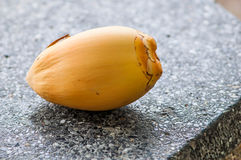 Kokosnoten het vallen Royalty-vrije Stock Foto
