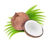 Kokosnoten met bladeren Stock Afbeelding