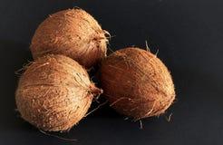 Kokosnoten op de zwarte achtergrond Royalty-vrije Stock Foto