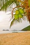Kokosnoten op een Strand Stock Afbeelding