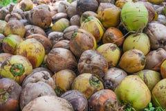 Kokosnoten op het eiland Stock Foto