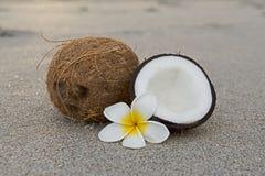 Kokosnoten op het strand Stock Afbeelding