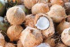 Kokosnoten op markt Royalty-vrije Stock Afbeeldingen