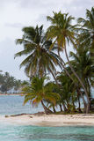Kokosnoten op Paradijseiland Stock Foto's