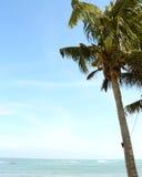 Kokosnoten plam boom bij het strand Stock Foto
