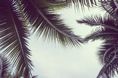 Kokosnoten plam boom met exemplaarruimte op hemel Stock Afbeelding