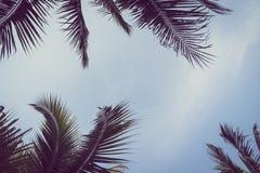 Kokosnoten plam boom met exemplaarruimte op hemel Royalty-vrije Stock Afbeeldingen