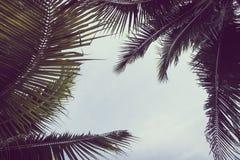 Kokosnoten plam boom met exemplaarruimte op hemel Royalty-vrije Stock Foto's