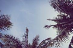 Kokosnoten plam boom met exemplaarruimte op hemel Stock Foto