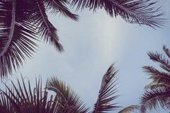 Kokosnoten plam boom met exemplaarruimte op hemel Royalty-vrije Stock Foto
